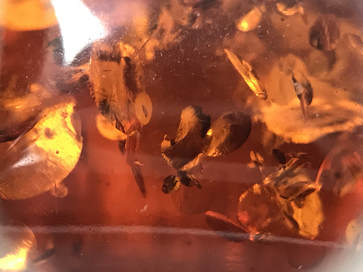 Sun spangle inclusions in amber
